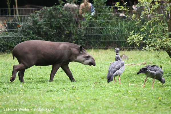 Zoo Dortmund 310711- IMG_3908-2