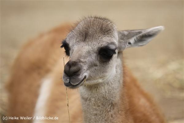 Zoo Dortmund 310711- IMG_3915