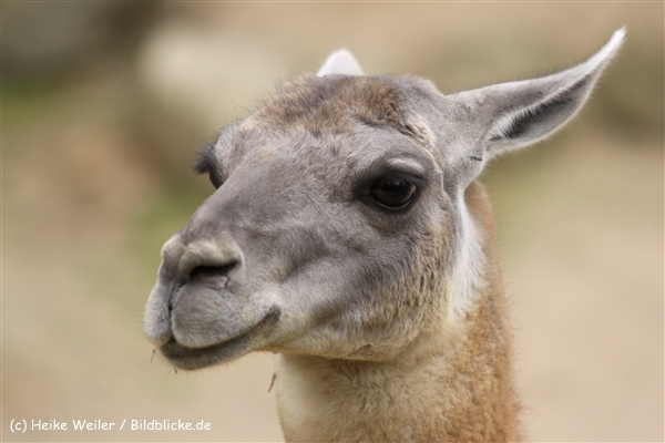 Zoo Dortmund 310711- IMG_3917-2