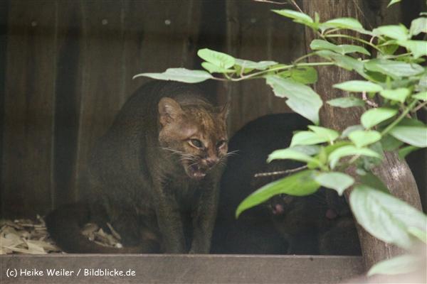 Zoo Dortmund 310711- IMG_3926