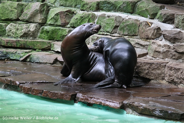 Zoo Dortmund 310711- IMG_3954