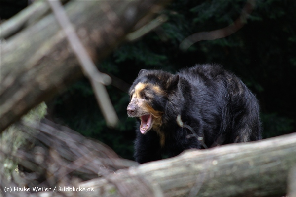 Zoo Dortmund 310711- IMG_3979