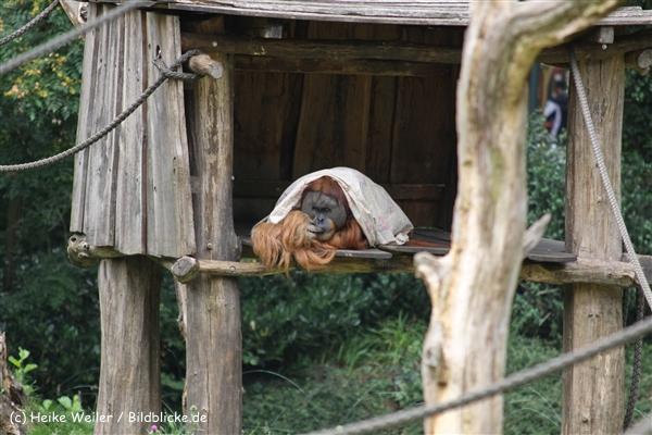 Zoo Dortmund 310711- IMG_3992