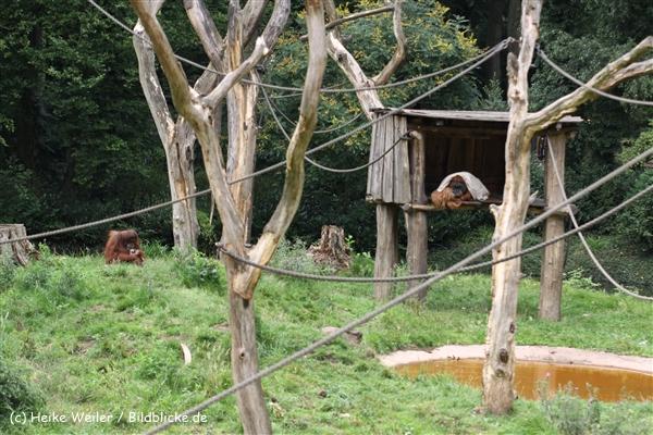 Zoo Dortmund 310711- IMG_3995-2