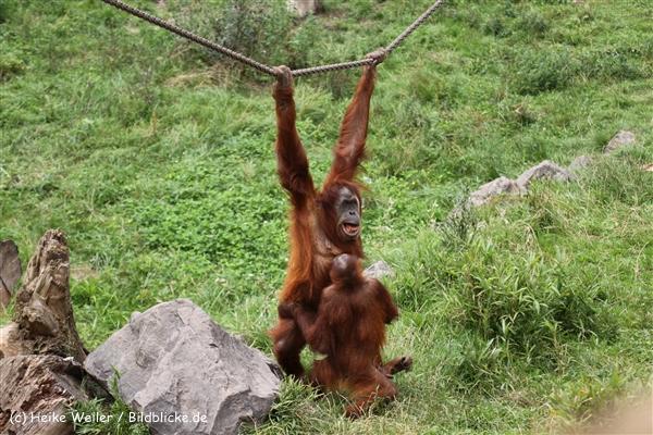 Zoo Dortmund 310711- IMG_3999