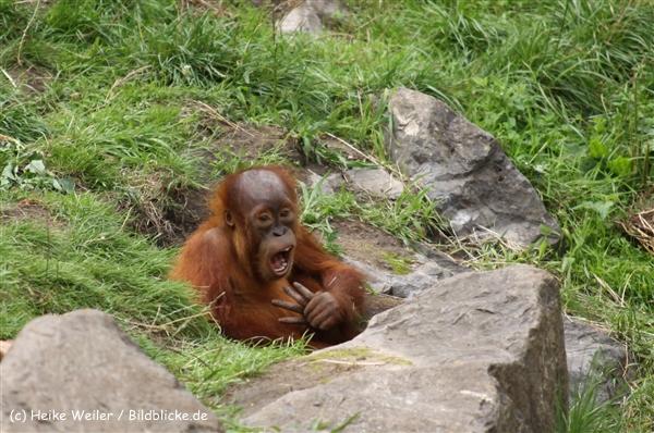 Zoo Dortmund 310711- IMG_4000