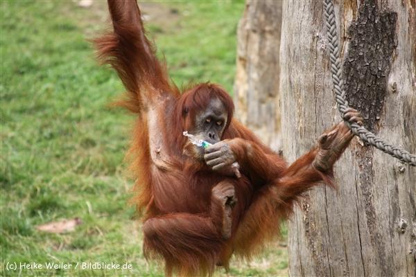 Zoo Dortmund 310711- IMG_4022-2