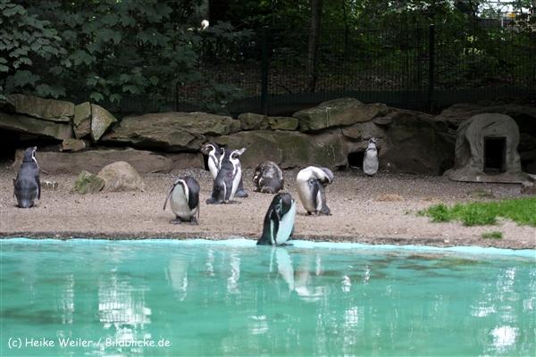 Zoo Dortmund 310711- IMG_4036