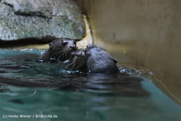 Zoo Dortmund 310711- IMG_4040