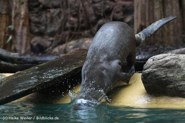 Zoo Dortmund 310711- IMG_4043-2