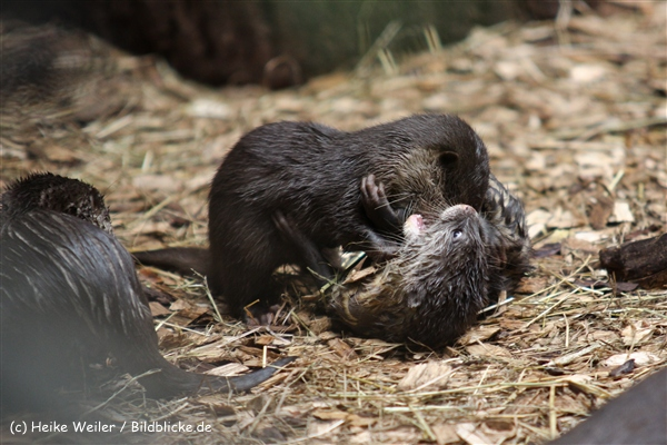Zoo Dortmund 310711- IMG_4053