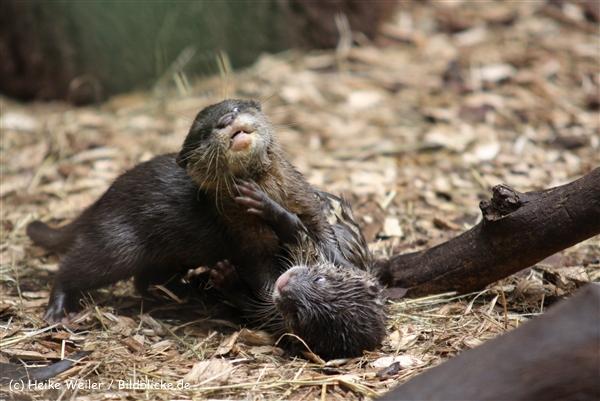 Zoo Dortmund 310711- IMG_4055