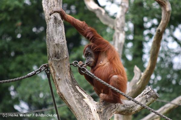 Zoo Dortmund 310711- IMG_4099