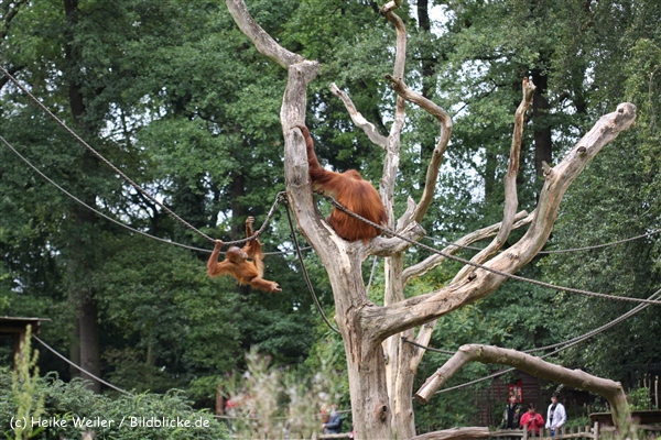 Zoo Dortmund 310711- IMG_4103