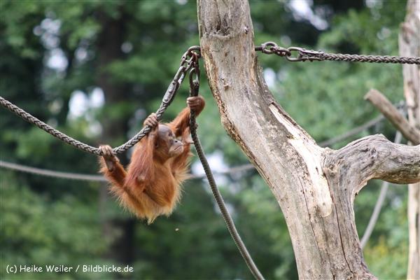 Zoo Dortmund 310711- IMG_4111