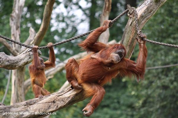 Zoo Dortmund 310711- IMG_4115
