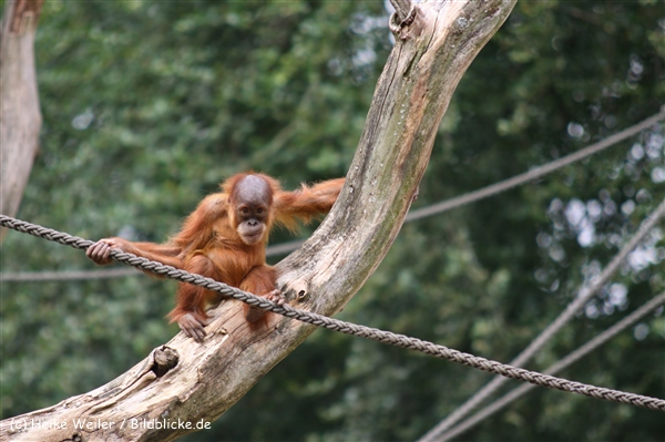 Zoo Dortmund 310711- IMG_4117