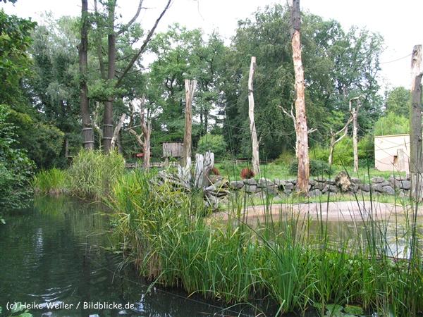 Zoo Dortmund 310711- IMG_4119_0292