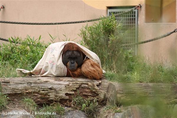 Zoo Dortmund 310711- IMG_4123