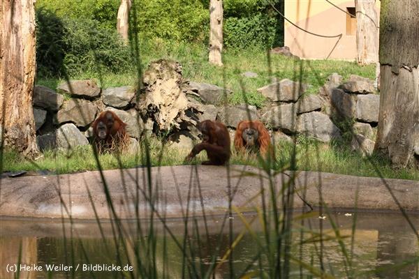 Zoo Dortmund 310711- IMG_4142