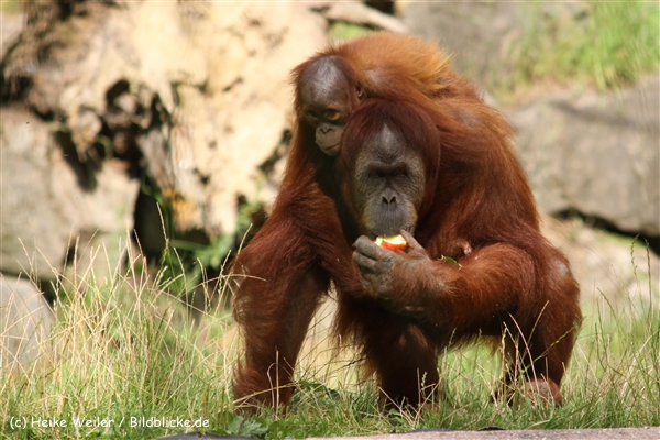 Zoo Dortmund 310711- IMG_4153