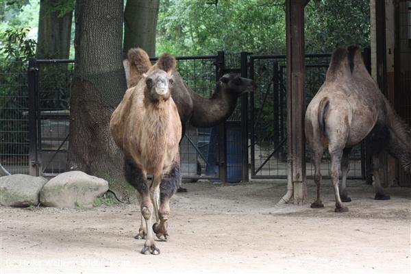Zoo Dortmund 310711- IMG_4185