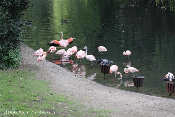 Zoo Dortmund 310711- IMG_4190