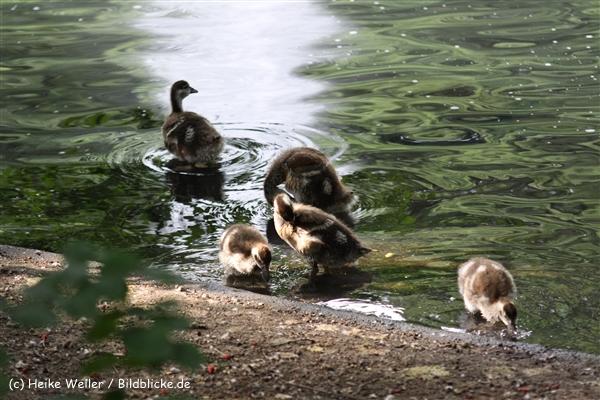 Zoo Dortmund 310711- IMG_4193