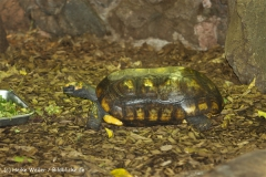 Zoo Dortmund 310711- IMG_3635