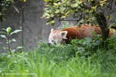 Zoo Dortmund 310711- IMG_3671