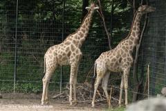 Zoo Dortmund 310711- IMG_3726