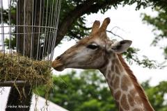 Zoo Dortmund 310711- IMG_3728