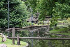 Zoo Dortmund 310711- IMG_3730