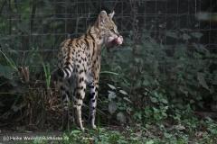 Zoo Dortmund 310711- IMG_3759