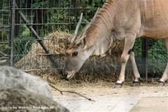 Zoo Dortmund 310711- IMG_3767