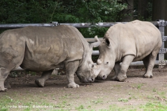 Zoo Dortmund 310711- IMG_3771