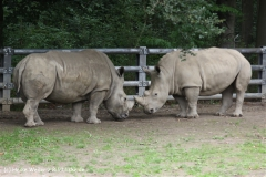 Zoo Dortmund 310711- IMG_3779