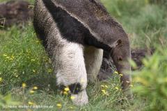 Zoo Dortmund 310711- IMG_3807