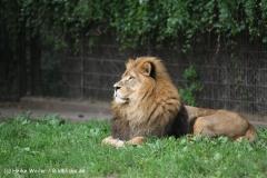 Zoo Dortmund 310711- IMG_3812