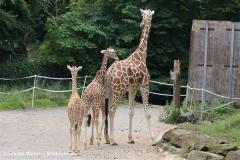 Zoo Duisburg 210810 - IMG_0444