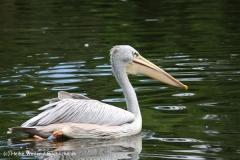 Zoo Duisburg 210810 - IMG_0454