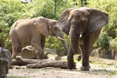 Zoo Duisburg 210810 - IMG_0487