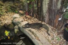 Zoo Duisburg 210810 - IMG_0529_1901