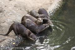 Zoo Duisburg 210810 - IMG_0588