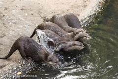 Zoo Duisburg 210810 - IMG_0589