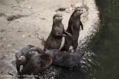 Zoo Duisburg 210810 - IMG_0601