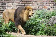 Zoo Duisburg 210810 - IMG_0647
