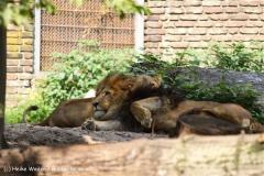 Zoo Duisburg 210810 - IMG_0666