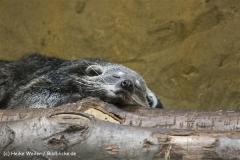 Zoo Duisburg 210810 - IMG_0695