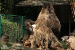 Zoo Duisburg 210810 - IMG_0703